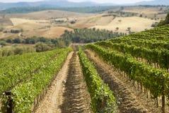 Wijngaard en heuvels royalty-vrije stock afbeeldingen