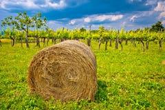 Wijngaard en hooibaal in binnenlandse Istria Stock Foto's