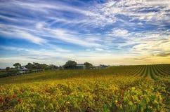 Wijngaard en huis in McLaren-Dal, Zuid-Australië Stock Foto's