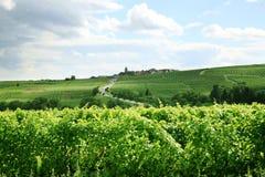 Wijngaard en klein dorp in de Elzas - Frankrijk Royalty-vrije Stock Fotografie