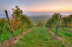 Wijngaard en landbouw Royalty-vrije Stock Afbeelding