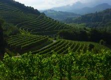 Wijngaard en landschapsmening van landbouwbedrijf in Zarautz Royalty-vrije Stock Fotografie