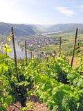 Wijngaard en rivier Stock Afbeeldingen