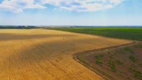 Wijngaard en tarwegebied in het platteland blauwe hemel met witte hierboven wolken stock footage