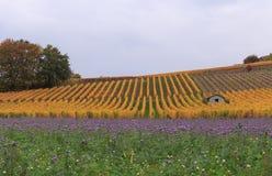 Wijngaard en violette weide bij de herfst 6 royalty-vrije stock afbeeldingen