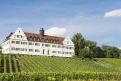Wijngaard en wijnmakerij Stock Foto