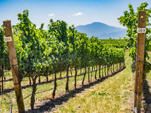 Wijngaard en wijnmakerij op plattelandsgebied stock foto's