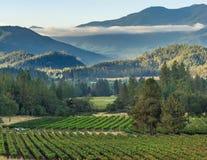 Wijngaard en wijnmakerij op plattelandsgebied stock afbeeldingen