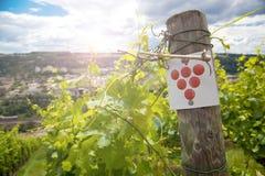 Wijngaard en wijnstokken in de vroege zomer, koninklijke wijngaard stock foto's