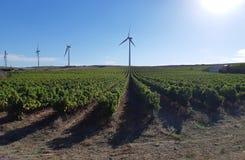 Wijngaard en windenergiegenerators royalty-vrije stock foto's