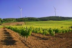 Wijngaard en windmolen Royalty-vrije Stock Foto's