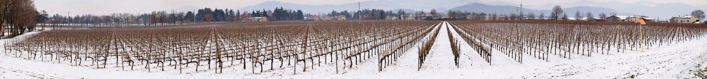 Wijngaard in Franciacorta in de winter met sneeuw Royalty-vrije Stock Foto