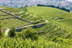 Wijngaard in Frankrijk royalty-vrije stock foto's