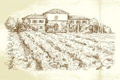 Wijngaard Frankrijk Royalty-vrije Stock Foto's