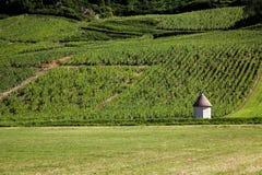 Wijngaard in Frankrijk Stock Foto