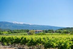 Wijngaard in Frankrijk Royalty-vrije Stock Afbeelding