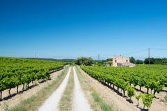 Wijngaard in Frankrijk Stock Afbeelding