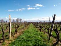 Wijngaard in Frankrijk Stock Afbeeldingen