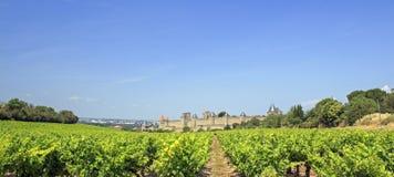 Wijngaard Frankrijk. Carcassonne. Stock Fotografie