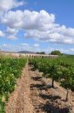 Wijngaard Frankrijk Jouarres Royalty-vrije Stock Afbeeldingen
