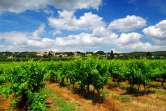 Wijngaard in Frans platteland Royalty-vrije Stock Fotografie