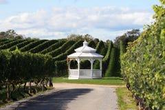 Wijngaard Gazebo stock foto