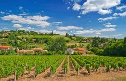 Wijngaard in het gebied van de Beaujolais, Frankrijk Royalty-vrije Stock Foto's