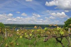 Wijngaard, het Maken van de Wijn Royalty-vrije Stock Foto's