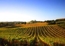 Wijngaard in Italië Stock Afbeelding