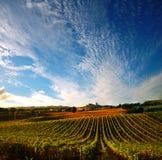 Wijngaard in Italië royalty-vrije stock afbeeldingen