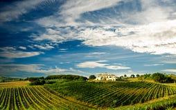 Wijngaard in Italië Royalty-vrije Stock Afbeelding