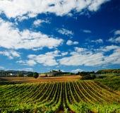 Wijngaard in Italië Royalty-vrije Stock Foto