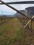 Wijngaard in Italië Stock Fotografie