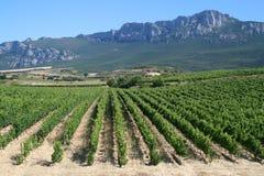 Wijngaard in La Rioja Royalty-vrije Stock Afbeelding