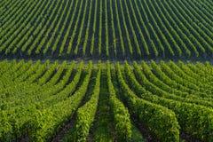 Wijngaard landschap-Bordeaux Viney Royalty-vrije Stock Afbeeldingen