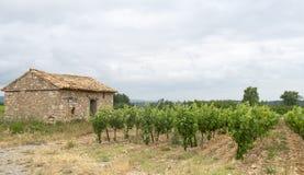 Wijngaard in Languedoc-Roussillon (Frankrijk) Stock Fotografie