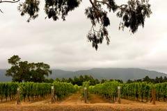Wijngaard in Marlborough Stock Foto's
