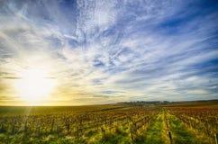 Wijngaard in McLaren-Dal, Zuid-Australië Stock Afbeeldingen