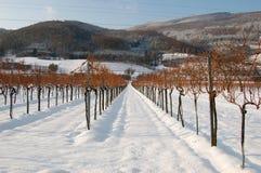 Wijngaard met bergen Stock Fotografie