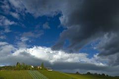Wijngaard met donkere wolken in de herfst Stock Foto's