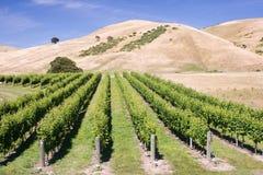 Wijngaard met heuvels op achtergrond royalty-vrije stock afbeelding