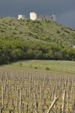 Wijngaard met oude ruine op de rug Stock Fotografie