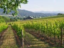 Wijngaard met Schuur en bergen Stock Fotografie