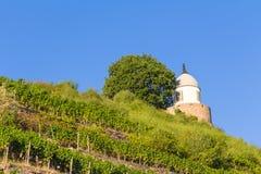 Wijngaard met verschillende soorten wijn met in de zomer Stock Foto's