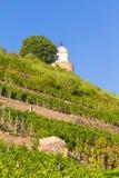 Wijngaard met verschillende soorten wijn met in de zomer Royalty-vrije Stock Afbeeldingen