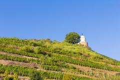 Wijngaard met verschillende soorten wijn met in de zomer Stock Foto
