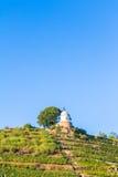 Wijngaard met verschillende soorten wijn met in de zomer Stock Afbeeldingen