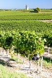 Wijngaard met windmolen Royalty-vrije Stock Foto's