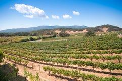 Wijngaard in Napa, Californië Royalty-vrije Stock Afbeeldingen