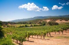 Wijngaard in Napa, Californië stock afbeeldingen